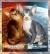 Канадский сфинкс, Абиссинская