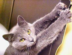 Почему кошки любят царапать мягкую мебель? | Питомники кошек ...